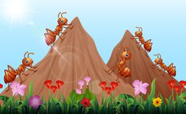 Cartoon ants colony with ant hill. Illustration of Cartoon ants colony with ant hill royalty free illustration