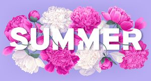 Summer design with blooming pink peony flowers, petals and leaves. royalty free illustration