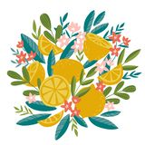Blooming lemon tree in hand drawn style. Vector design element isolated on the white background. Tropical fruit decor. Blooming lemon tree in hand drawn style royalty free illustration