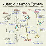 Basic types of neurons Royalty Free Stock Photo