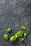 Basilów liście na czerń kamieniu Zdjęcia Stock