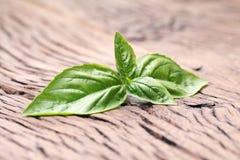 Basilów liście na starym drewnianym stole Zdjęcie Stock