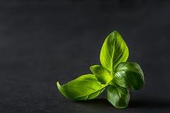 Basilów liście zdjęcie stock