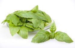 Basilów liście w szklanym talerzu Zdjęcia Stock