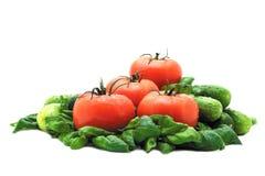 basilów pomidory obrazy stock
