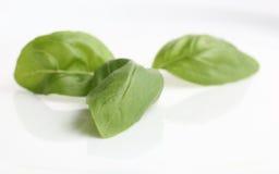 Basil. Fresh green basil isolated on white Stock Image