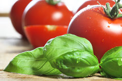 Basil. With tomatoes in the background stock photography