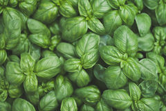 Basil Images stock