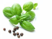 Basil and allspice Stock Image