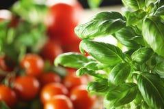 Free Basil And Tomato Stock Photography - 67402802