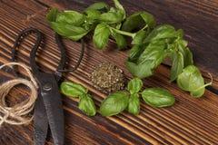 Basil, Aromatic culinary herbs. Royalty Free Stock Photo