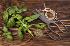 Basil, Aromatic culinary herbs. Royalty Free Stock Photography