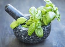 Basil Aromatic Herb em um almofariz com pistilo imagem de stock