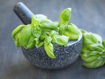 Basil Aromatic Herb em um almofariz com pistilo fotos de stock