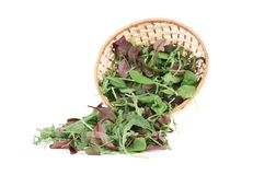 Basil and arugula. Stock Images