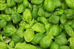 Basil background Stock Photo