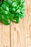 Basil background. Fresh basil on wooden desk. Copy space background Stock Photos