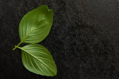 Basil on a black background Royalty Free Stock Photography
