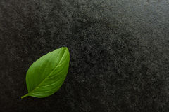 Basil on a black background Stock Photo