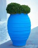 Basil in blue ceramic jar Stock Photography