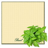 Basil Border Square Copyspace Royalty Free Stock Images
