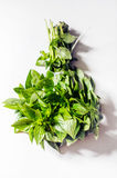 Basil bouquet Stock Photography