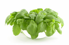 Basil in bowl Stock Images
