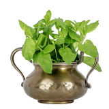 Basil and a brass utensil Stock Photography