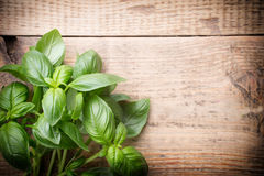 Basil. Stock Photos