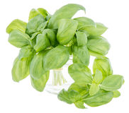 Basil bunch isolated on white Royalty Free Stock Images