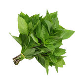 Basil Bundle Royalty Free Stock Photo