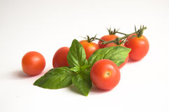 Basil and cherry tomatoes. Royalty Free Stock Photography