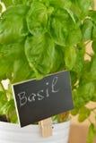 Basil dans un pot Image libre de droits