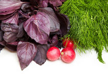 Basil, dills and red radish Royalty Free Stock Photo