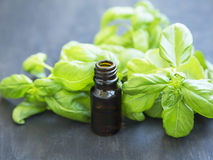 Basil Essential Oil i en flaska med Basil Herb Leaves Royaltyfria Foton