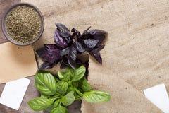Basil frais et sec Photo stock