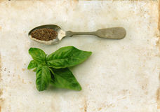 Basil Fresh and Dried on Spoon Royalty Free Stock Photos