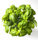 Basil. Fresh basil excellent deposit for use in healthy cuisine Royalty Free Stock Images