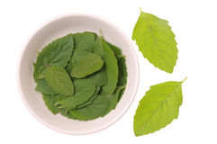 Basil Fresh Leaves Stock Images