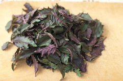 Basil fresh leaves Stock Photos