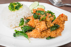 Basil fried rice with crispy chicken (Pad kra prao kai krob) Royalty Free Stock Photo