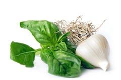Basil & garlic. Basil and garlic. Isolated white Royalty Free Stock Photos