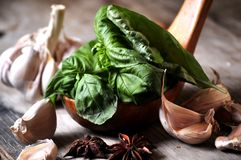 Basil and garlic for pesto sauce elaboration Stock Images
