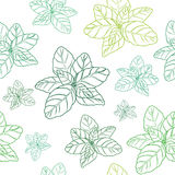 Basil  green seamless pattern. Hand drawn basil seamless pattern  on white background.  Herbal Ingredient for traditional cuisine, medicine, treatment, cooking Stock Photos