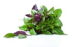 Basil Greens Royalty Free Stock Image
