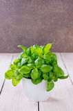 Basil growing in a pot Stock Photography