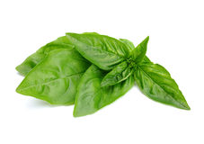 Basil herb leaf Royalty Free Stock Photography