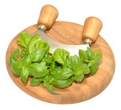 Basil Herb leaves On Chopping Board Royalty Free Stock Photography