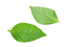 Free Basil Herb Leaves Isolated On White Background Closeup Stock Photos - 96402353
