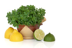 Basil Herb with Lemon and Lime Fruit Royalty Free Stock Image
